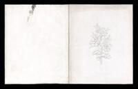 1857_Chiodini.jpg